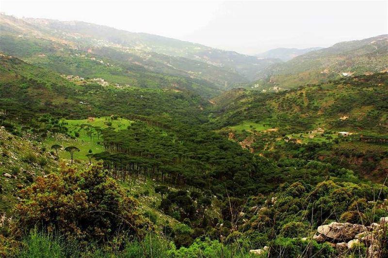 """لبنان الأخضر (📸 """"لبنان 24"""")⠀⠀⠀⠀⠀⠀⠀⠀⠀ ⠀⠀⠀⠀⠀⠀⠀⠀⠀⠀⠀⠀ ⠀⠀⠀⠀⠀⠀⠀⠀⠀⠀⠀⠀ ⠀⠀⠀⠀⠀⠀⠀⠀⠀"""
