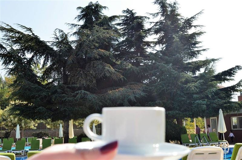 💫 Nothing beats a morning coffee by these beautiful cedars.. 😀 (Swipe... (Ehden Country Club)