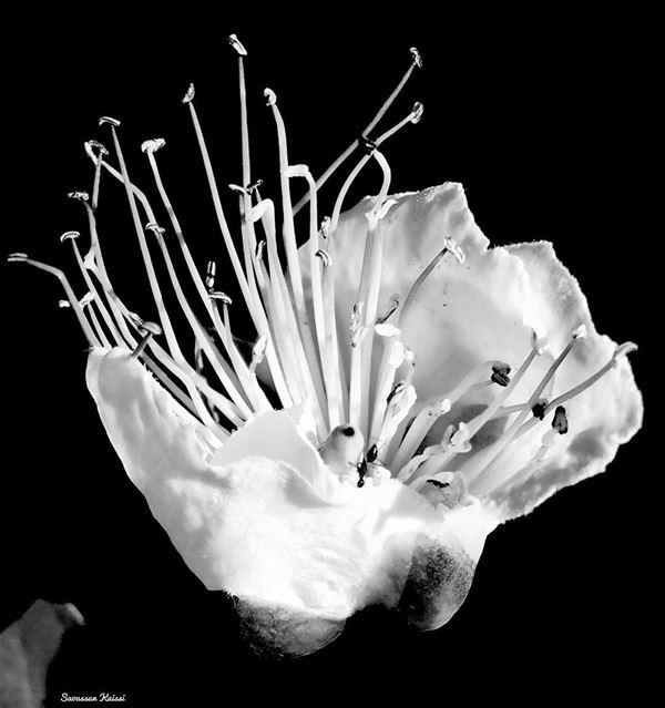 blackandwhite monochrome wildflower ...
