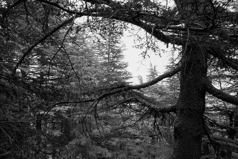 //Into the woods// lebanon livelovelebanon barouk livelovebarouk woods... (Bâroûk, Mont-Liban, Lebanon)