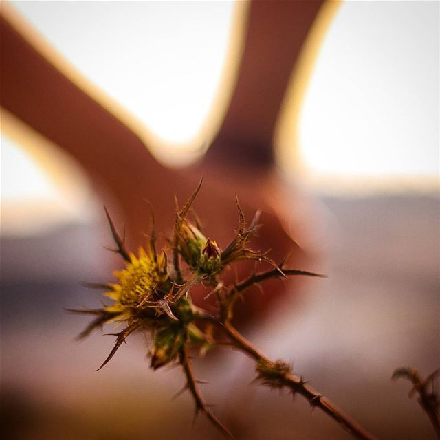 It's gonna be a prickly path , but i promise i will never let go your hand...