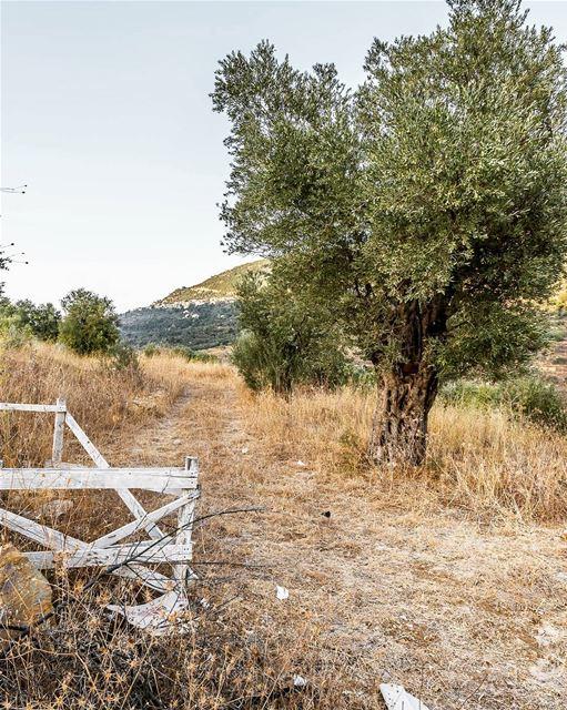 Mazraat el Chouf lebanon hiking nature outdoors livelovelebanon ... (Mazra`At Ash Shuf, Mont-Liban, Lebanon)