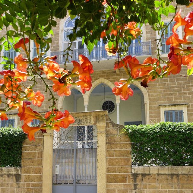 Under the shades of trumpet bell tree 🎺🌺 flowers  orangeflowers ... (Achrafieh, Lebanon)