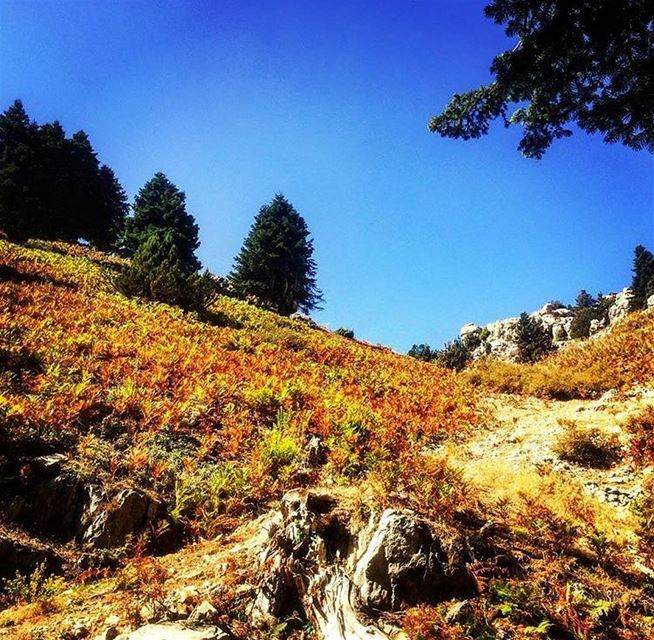The art of God. trekking hiking nature kobayat livelovekobayat hill... (Al Qubayyat, Liban-Nord, Lebanon)