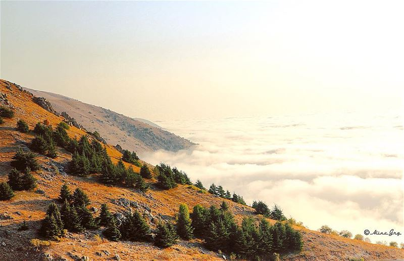 Where Cedars & Clouds meet ☁️🌲 clouds sunset abovetheclouds autumn ... (Al Shouf Cedar Nature Reserve)