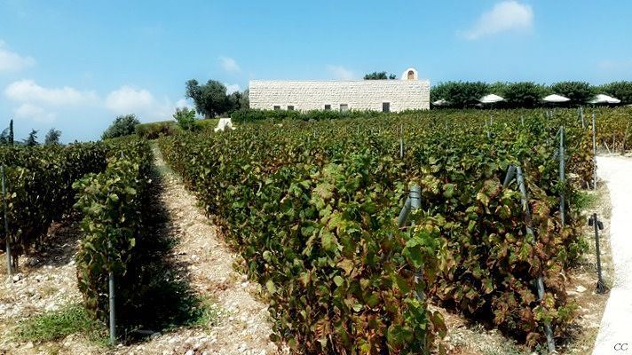 lebanon livelovelebanon ixsir winery batroun whatsuplebanon ...