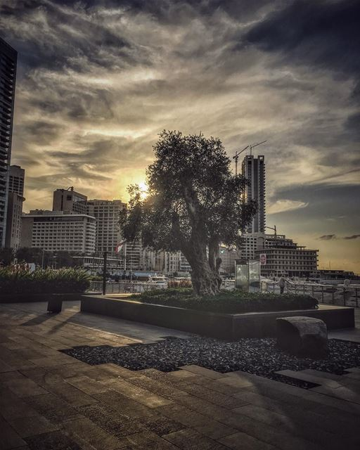Divine, a moment in time, we hold on , forget , its gone. More will come,... (Zaitunay Bay)