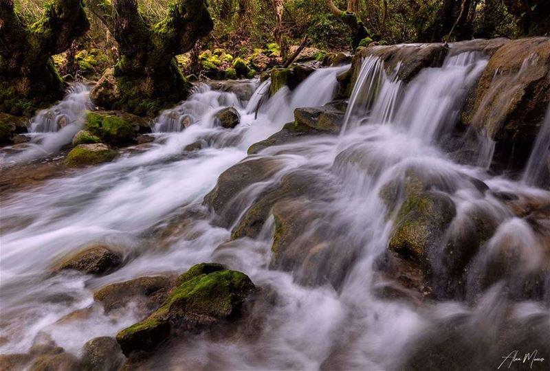 river lebanon shouf fallingwater runningwater trees authentic ...