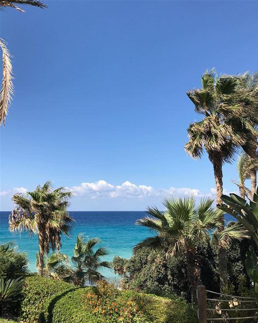 My kind of scenery 🌴🌴summer is still on 🌊🌊 whatsuplebanon ... (Thoum/batroun-Lebanon)