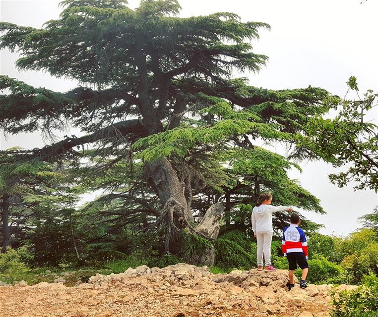 """Nature is the best playground""🍃🍃 nature cedars chouf arzelbarouk ... (Arz el Bâroûk)"