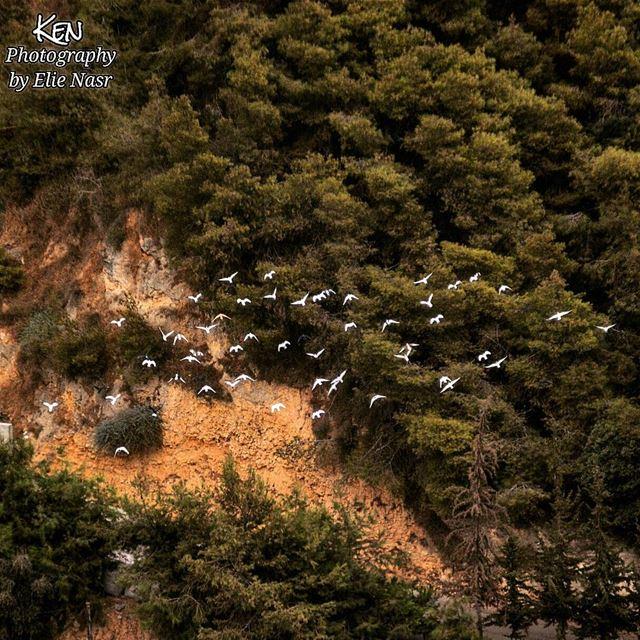 ...بميدان عينيكِ..تبني الحمائم بيتاًوتدخلُ - دون انتظار - علينا القصيدة... (Fanar, Mont-Liban, Lebanon)