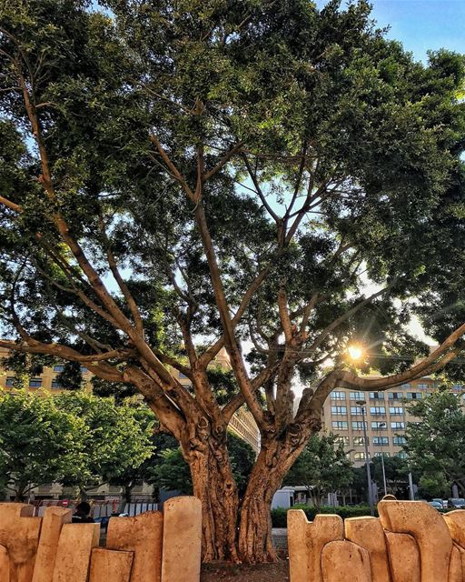 How pretty is this tree! Found it when i was cycling this morning in... (Downtown Beirut)