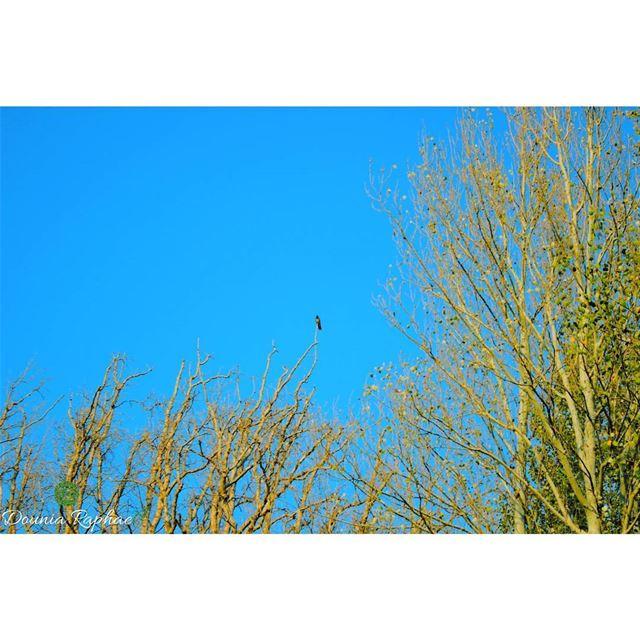 A forest bird never wants a cage 🍃 - Henrik Ibsen...Canon EOS 💯D..... (Deïr Taanâyel, Béqaa, Lebanon)