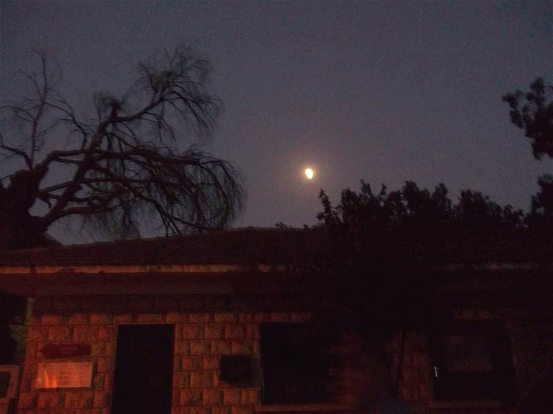 A late photograph 🌃 nightout nightshoot moon moonlight trees bekaa ... (West Bekaa)