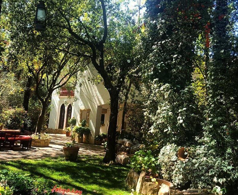 morning nature naturelovers trees garden lebanonhouses instacool relax... (Bikfaïya, Mont-Liban, Lebanon)