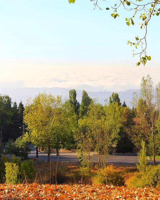 Autumn colors 🍂🍃🍁🍃🍂 (Faqra (fornlämning i Libanon, lat 34,00, long 35,81))