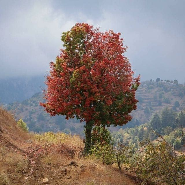 treestagram tree_love akkar lebanon ig_travel ig_lebanon ...