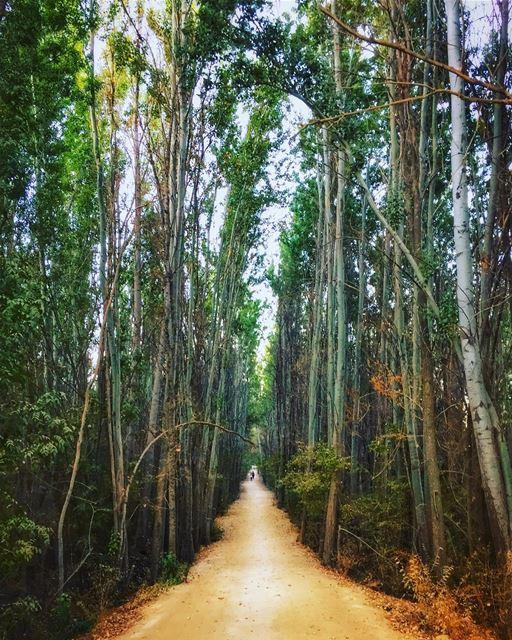 كبُرنا، كم كبُرنا..والطريقُ إلى الفرحِ لا يزال طويل.. fall nature ... (Deïr Taanâyel, Béqaa, Lebanon)