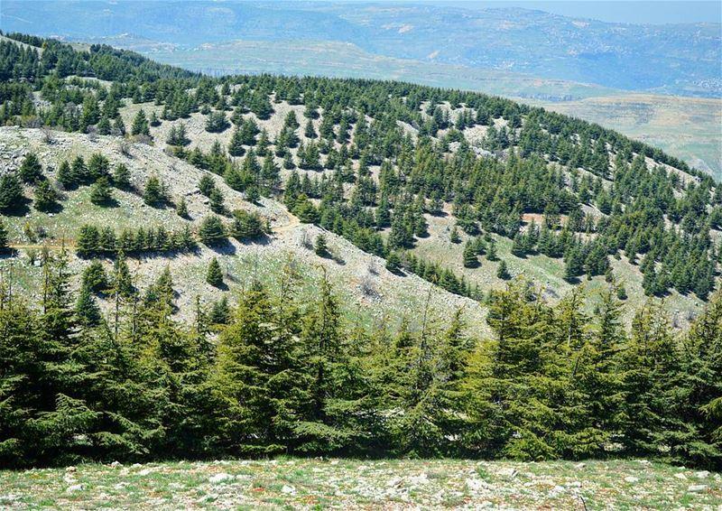 My Paradise on earth! loves_lebanon super_lebanon ig_lebanon ... (Arz el Bâroûk)