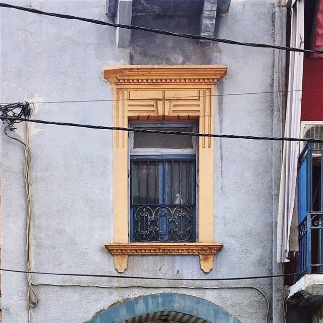 decorative trim 🎢