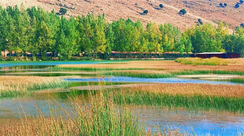 Where there's water, there's life...🍃🍁🌏 lac lake nature tree trees... (عيون ارغش)