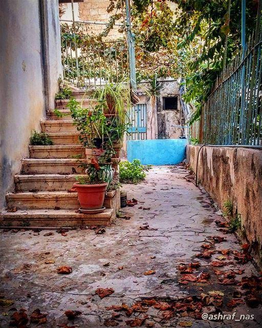 يا ورق الأصفر عم نكبر عم نكبرالطرقات البيوت عم تكبر عم تكبر...بتخلص الدني (Tyre, Lebanon)