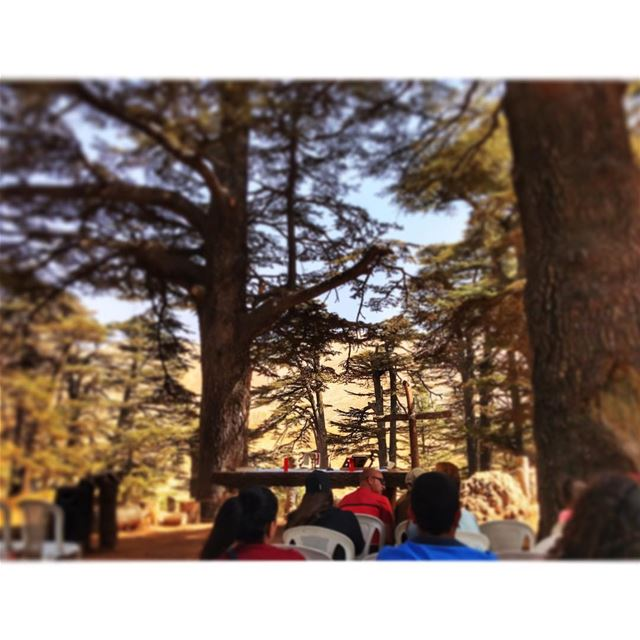 outdoorchurch ⛪️ livelovelebanon livelovecedars cedars cedarsofgod ... (Bsharri, Cedars)