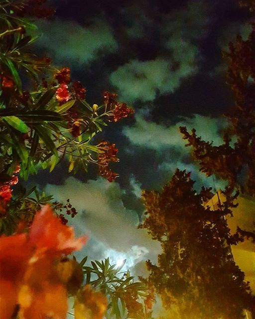 BFF .. Moon & Nature ..🌚🍃🌺.. goodevening beirut ......... .... (Lebanese American University - LAU)