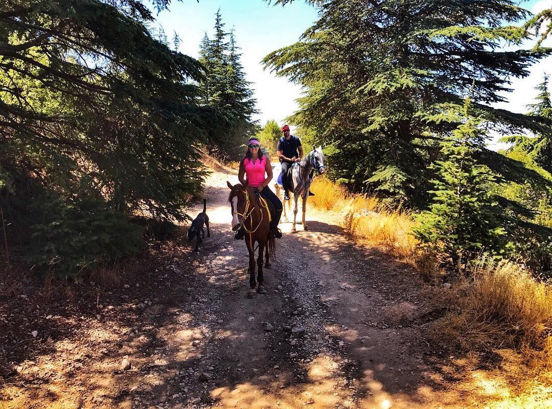 Saddle up and go horses horsebackriding outdooractivities ... (Al Shouf Cedar Nature Reserve)