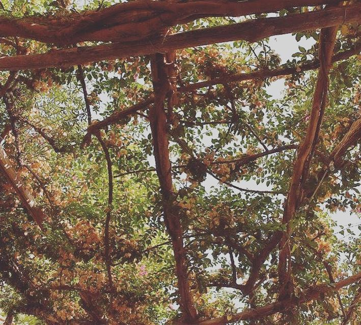 calm colors fall season autumn nature weather lebanon photgraphy...