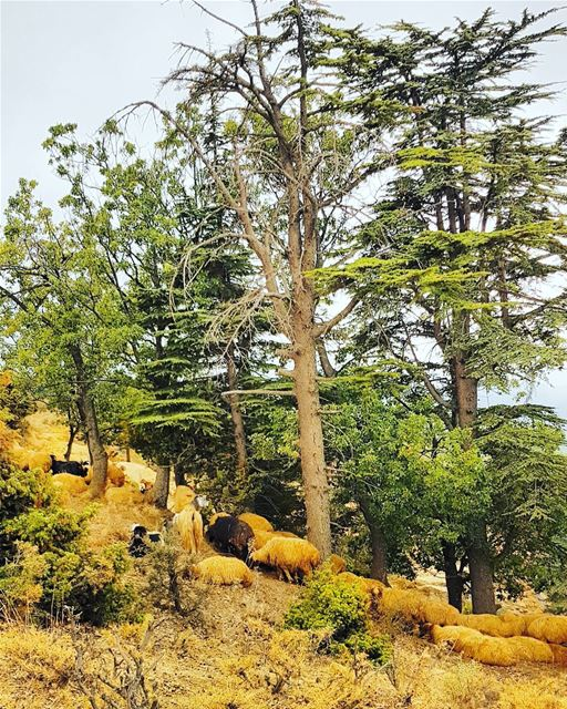 nature hiking trees cedars naturephotography whatsuplebanon ... (Hadeth El Joubbe, Liban-Nord, Lebanon)