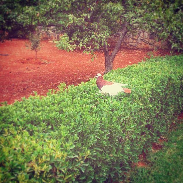 amioun north lebanon home pigeon garden LifeWithAView ... (Amyun)