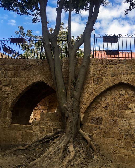 The lebanese roots 🇱🇧 livelovebatroun livelovebeirut ... (Batroûn)