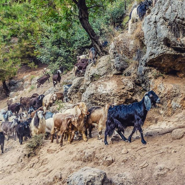 Freidis, Qannoubine Valley, Lebanon lebanon hiking nature outdoors ... (Ouâdi Qannoûbîne, Liban-Nord, Lebanon)