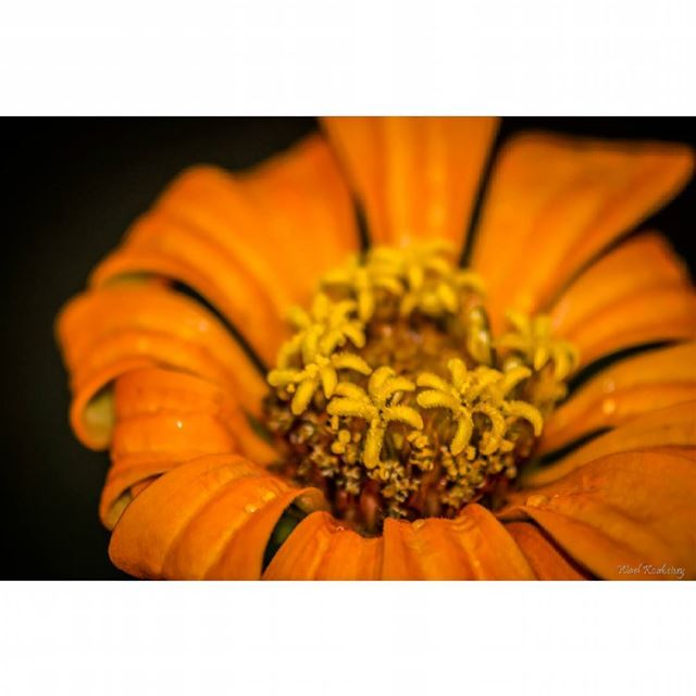 nature  flower  earth  wildlife  flowers  orange  yellow  natureshots ...
