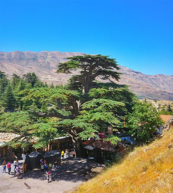 Cedars of Lebanon 😍 lebanon nature naturelovers natureporn landscape... (Cedars of God)