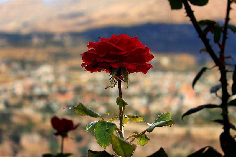 🌷⚘ sergesarkisphotography photographer photography canon canoneos ... (Bsharri, Lebanon)