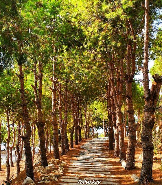 autumn trees naturelovers autumn🍁 photooftheday canon_photos like4like... (Maghdoûché, Liban-Sud, Lebanon)