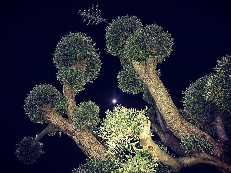 A sweet fullmoon goodnight 🌿🌕 lebanon lebanon_hdr livelovealey ... (Aley EquiClub)