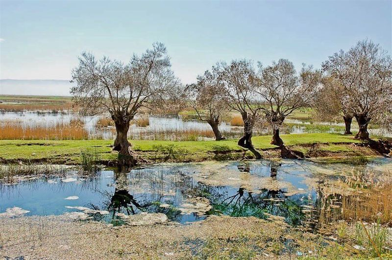lebanese bekaa naturephotography nature naturelovers iglebanon ...