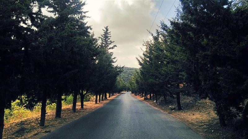 No one said the journey was easy!! But make it worthwhile ✨✨. Have a... (Al Shouf Cedar Nature Reserve)