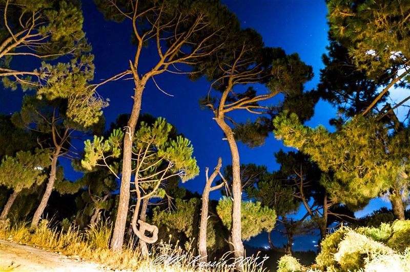 trees mountain moonlight ngconassignment Lebanon ig_great_shots ... (Baskinta, Lebanon)