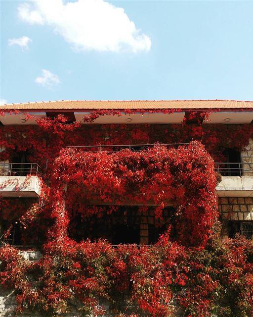 When fall takes over 🍁... (Bhamdoûn, Mont-Liban, Lebanon)