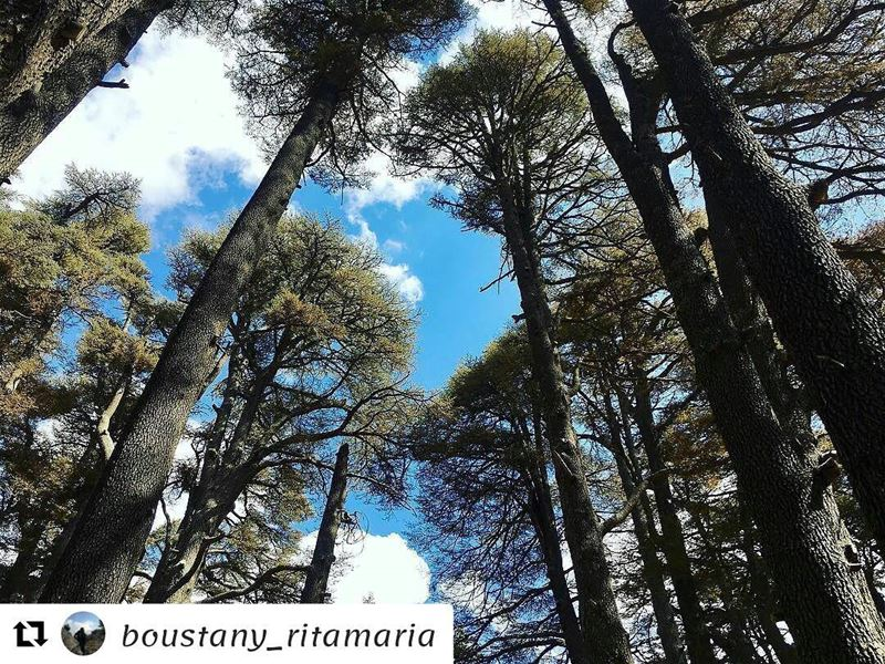 Repost @boustany_ritamaria (@get_repost)・・・Go where you feel most alive...
