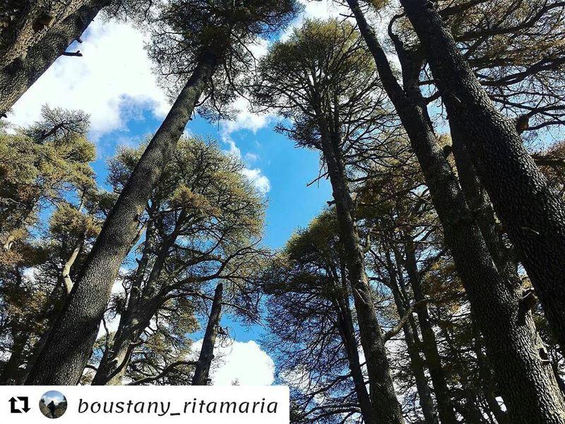 Repost @boustany_ritamaria (@get_repost)・・・Go where you feel most alive...