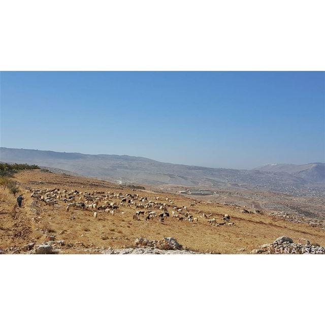 🐩🐐 (Qaraaoun, Béqaa, Lebanon)