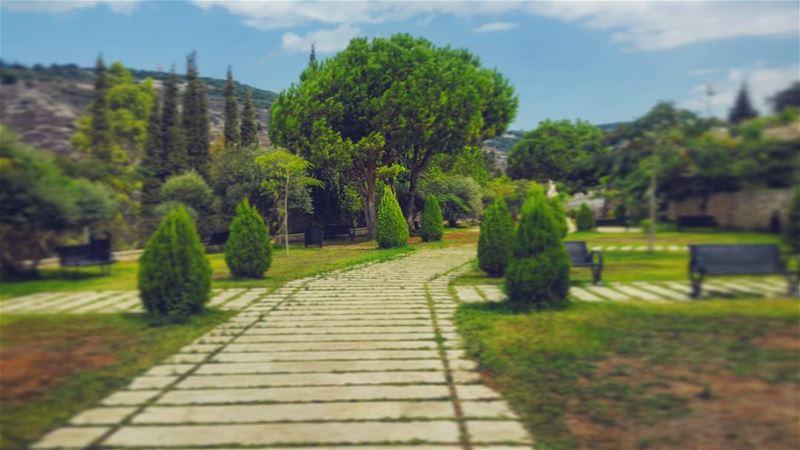 Gardening. garden lebanon pine trees relax beautiful landscape ...
