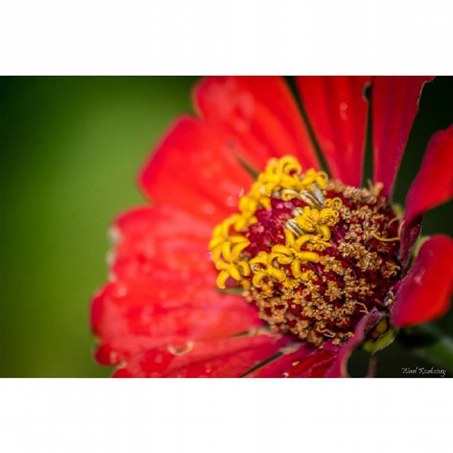 nature flower earth wildlife flowers red yellow natureshots macro...