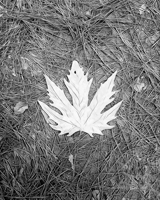 'even a tree drops its leaf when it no longer serves it...''''... (Lebanon)