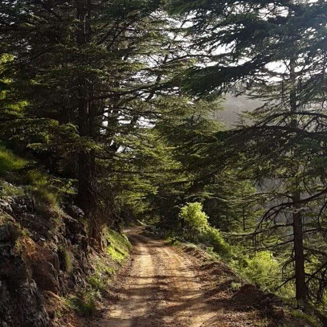 lebabon  offroad  ride  hadetheljebbeh  tannourine  trees  nature  green ...